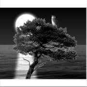 Måne, uv och hav